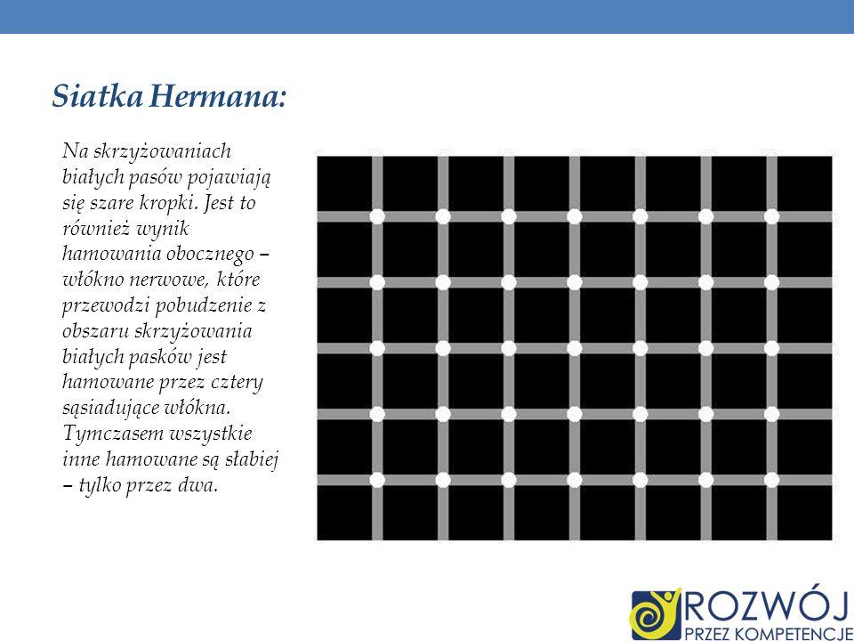 Siatka Hermana: Na skrzyżowaniach białych pasów pojawiają się szare kropki. Jest to również wynik hamowania obocznego – włókno nerwowe, które przewodz