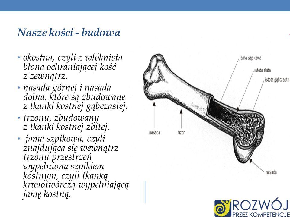 Nasze kości - budowa okostna, czyli z włóknista błona ochraniającej kość z zewnątrz. nasada górnej i nasada dolna, które są zbudowane z tkanki kostnej