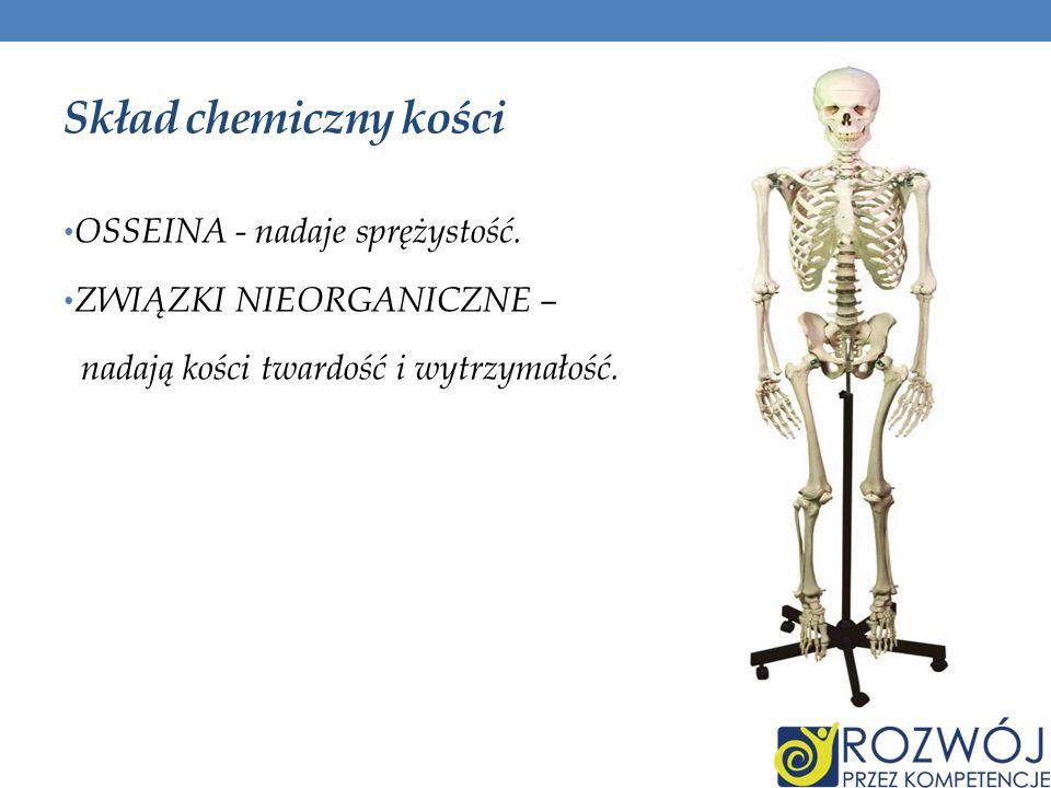 Skład chemiczny kości OSSEINA - nadaje sprężystość. ZWIĄZKI NIEORGANICZNE – nadają kości twardość i wytrzymałość.