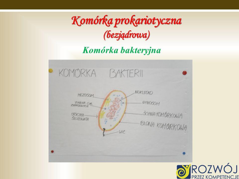 Komórka prokariotyczna (bezjądrowa) Komórka bakteryjna