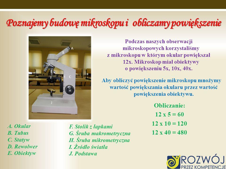 Poznajemy budowę mikroskopu i obliczamy powiększenie A. Okular B. Tubus C. Statyw D. Rewolwer E. Obiektyw F. Stolik z łapkami G. Śruba makrometryczna