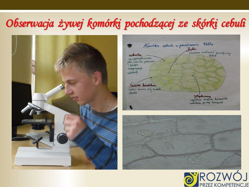 Obserwacja żywej komórki pochodzącej ze skórki cebuli