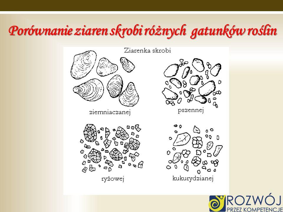 Porównanie ziaren skrobi różnych gatunków roślin
