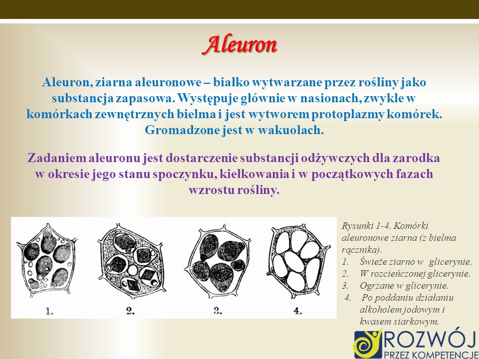 Aleuron Aleuron, ziarna aleuronowe – białko wytwarzane przez rośliny jako substancja zapasowa. Występuje głównie w nasionach, zwykle w komórkach zewnę