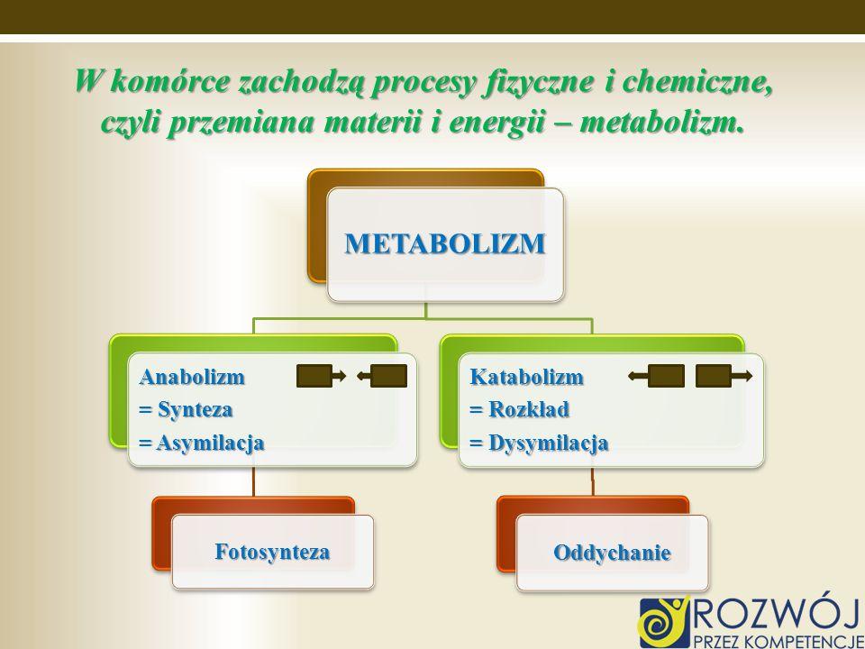 W komórce zachodzą procesy fizyczne i chemiczne, czyli przemiana materii i energii – metabolizm. METABOLIZM Anabolizm = Synteza = Asymilacja Fotosynte