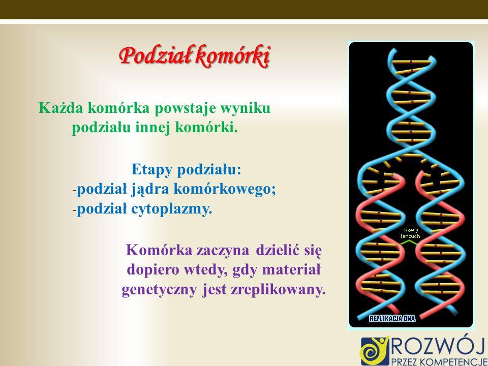 Podział komórki Etapy podziału: - podział jądra komórkowego; - podział cytoplazmy. Każda komórka powstaje wyniku podziału innej komórki. Komórka zaczy