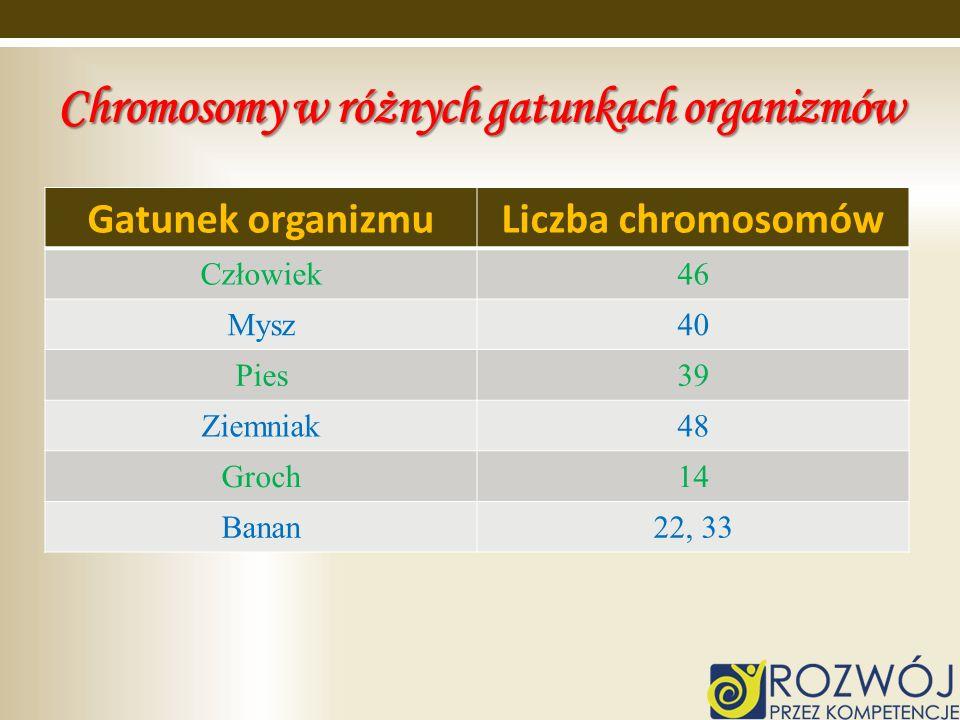 Chromosomy w różnych gatunkach organizmów Gatunek organizmuLiczba chromosomów Człowiek46 Mysz40 Pies39 Ziemniak48 Groch14 Banan22, 33