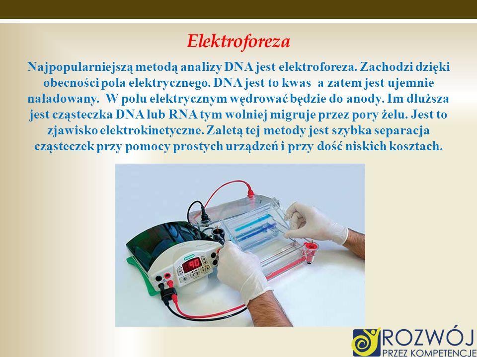 Elektroforeza Najpopularniejszą metodą analizy DNA jest elektroforeza. Zachodzi dzięki obecności pola elektrycznego. DNA jest to kwas a zatem jest uje