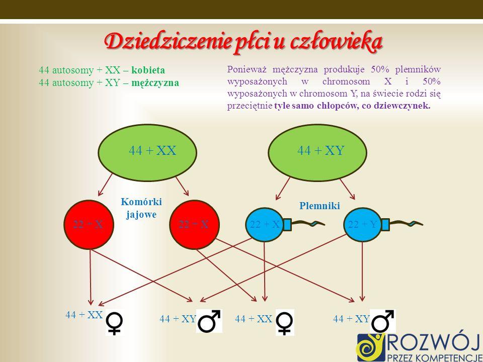 Dziedziczenie płci u człowieka 44 autosomy + XX – kobieta 44 autosomy + XY – mężczyzna 44 + XX 44 + XY 22 + X 22 + Y 44 + XX 44 + XY44 + XX44 + XY Kom