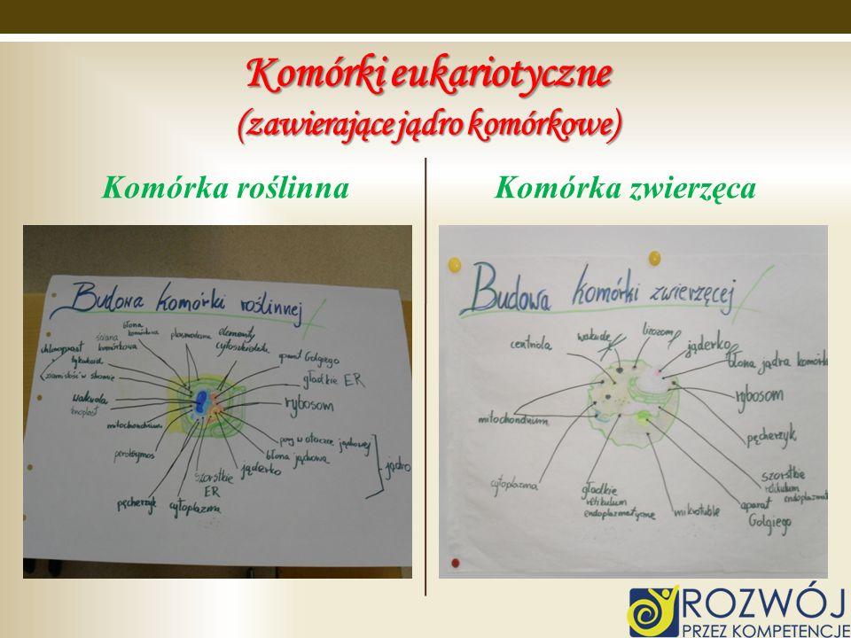 Komórki eukariotyczne (zawierające jądro komórkowe) Komórka roślinnaKomórka zwierzęca