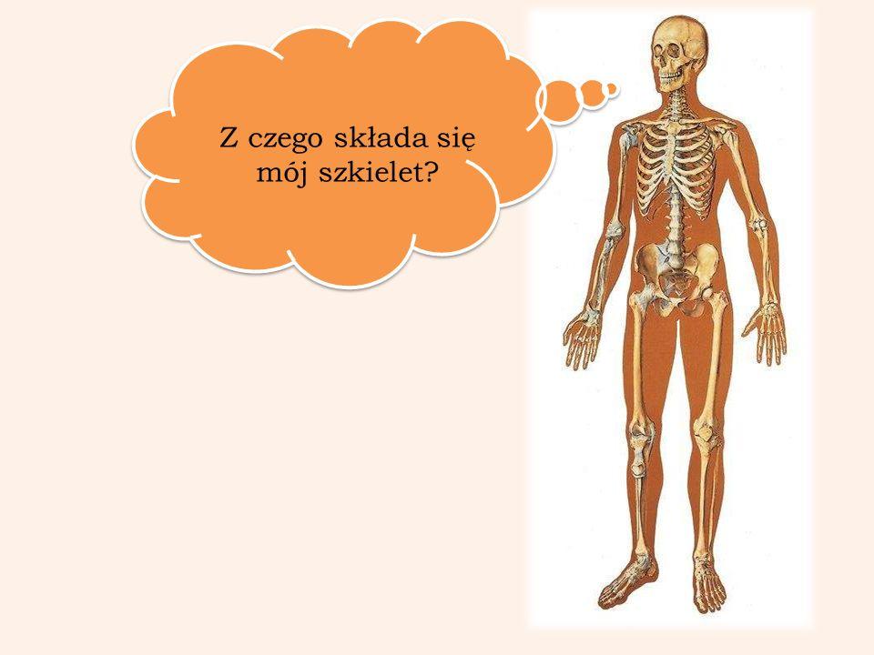 Z czego składa się mój szkielet?