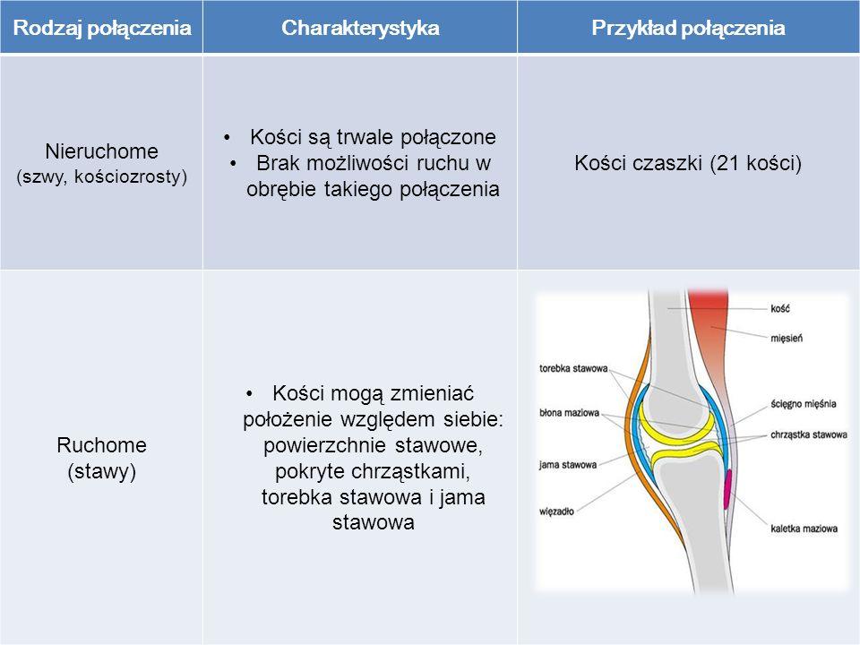 Rodzaj połączeniaCharakterystykaPrzykład połączenia Nieruchome (szwy, kościozrosty) Kości są trwale połączone Brak możliwości ruchu w obrębie takiego