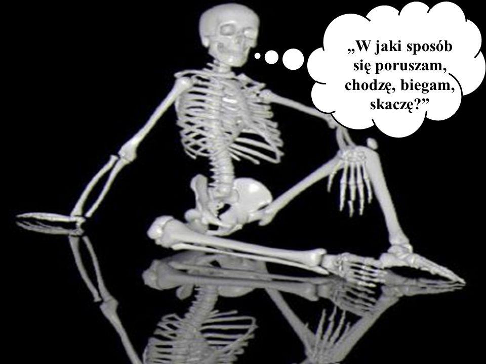 Kości nadgarstka