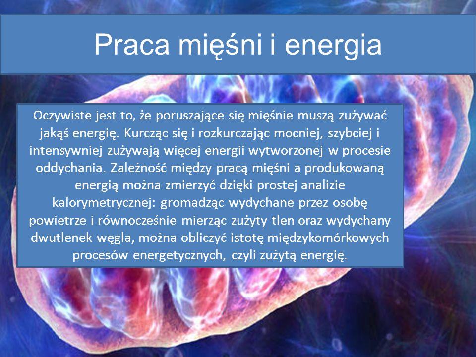 Praca mięśni i energia Oczywiste jest to, że poruszające się mięśnie muszą zużywać jakąś energię. Kurcząc się i rozkurczając mocniej, szybciej i inten