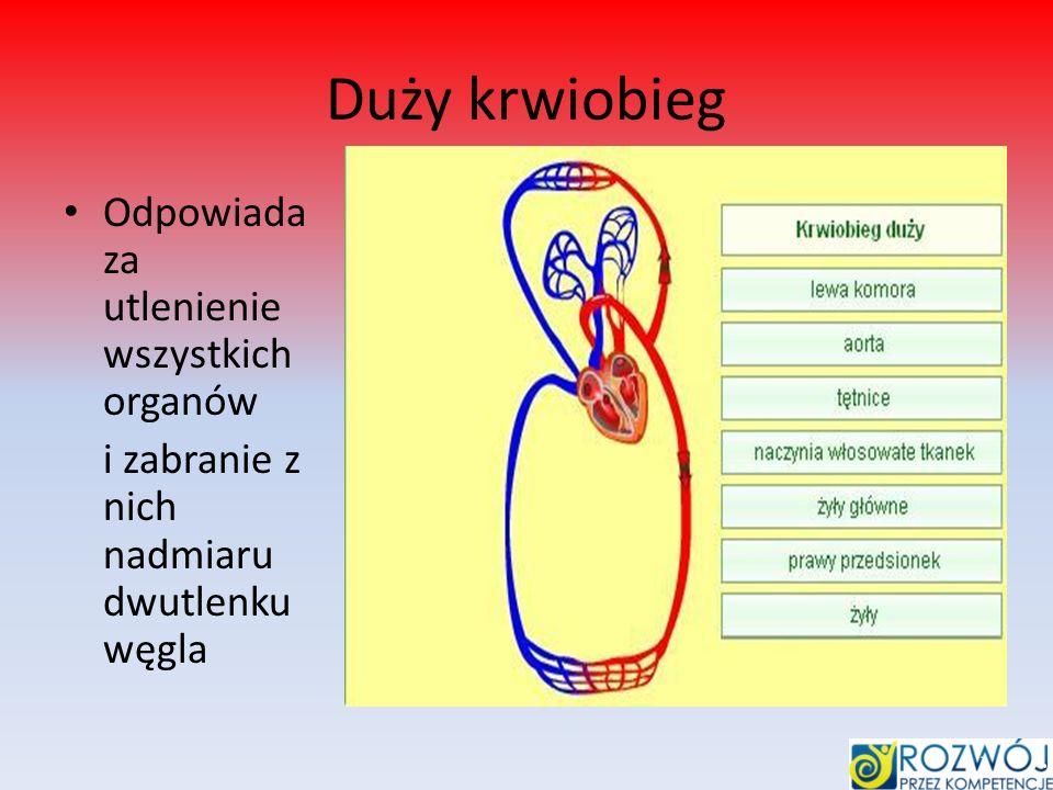 Duży krwiobieg Odpowiada za utlenienie wszystkich organów i zabranie z nich nadmiaru dwutlenku węgla