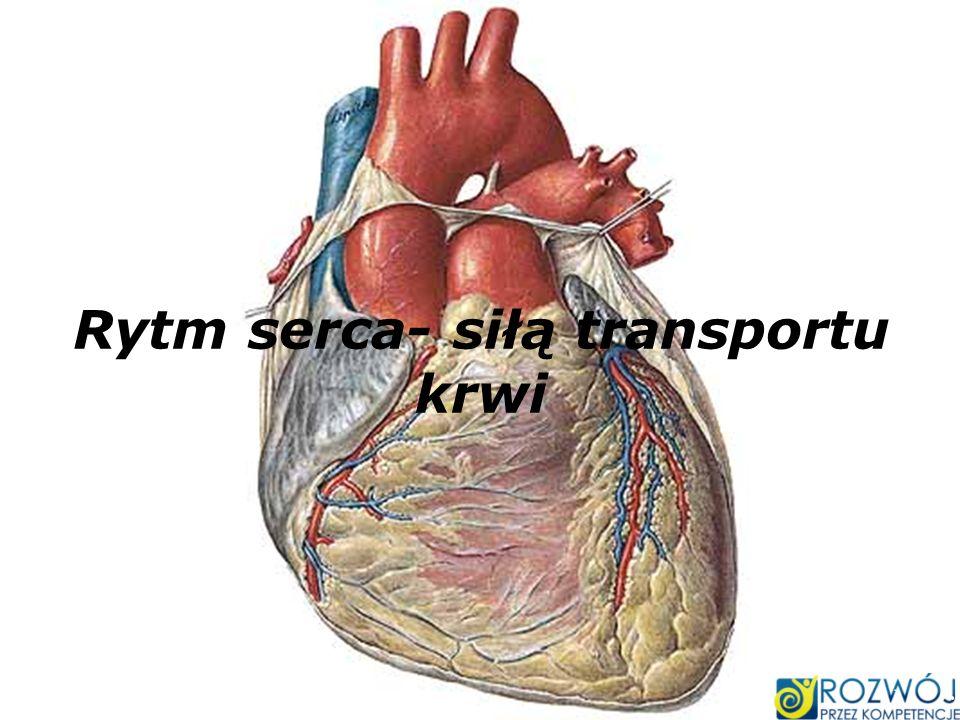 Rytm serca- siłą transportu krwi