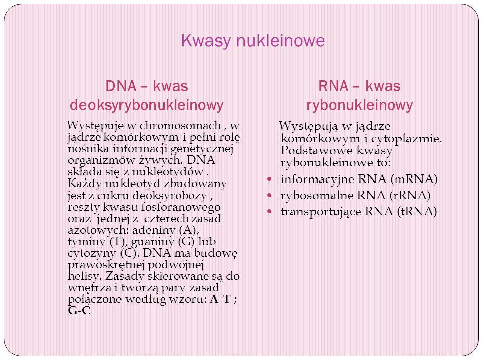 Kwasy nukleinowe DNA – kwas deoksyrybonukleinowy RNA – kwas rybonukleinowy Występuje w chromosomach, w jądrze komórkowym i pełni rolę nośnika informac