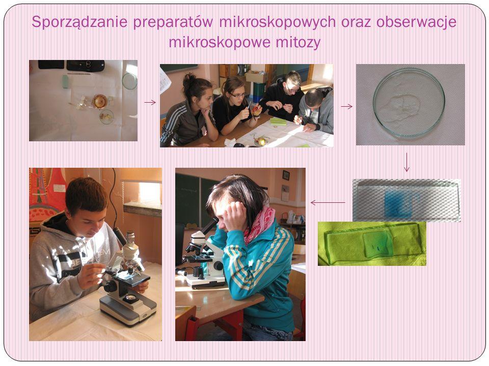 Sporządzanie preparatów mikroskopowych oraz obserwacje mikroskopowe mitozy