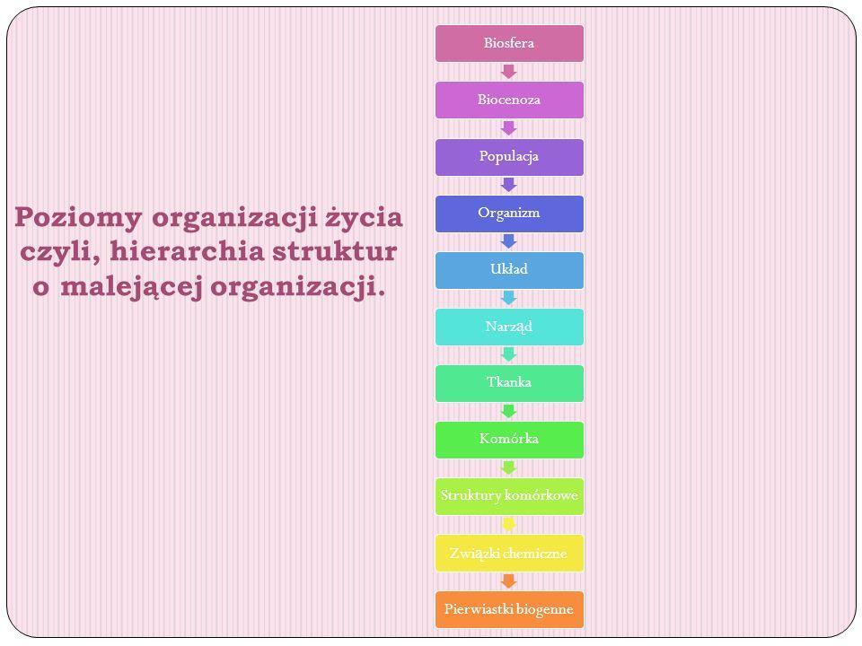 Poziomy organizacji życia czyli, hierarchia struktur o malejącej organizacji. BiosferaBiocenozaPopulacjaOrganizmUkładNarz ą dTkankaKomórkaStruktury ko