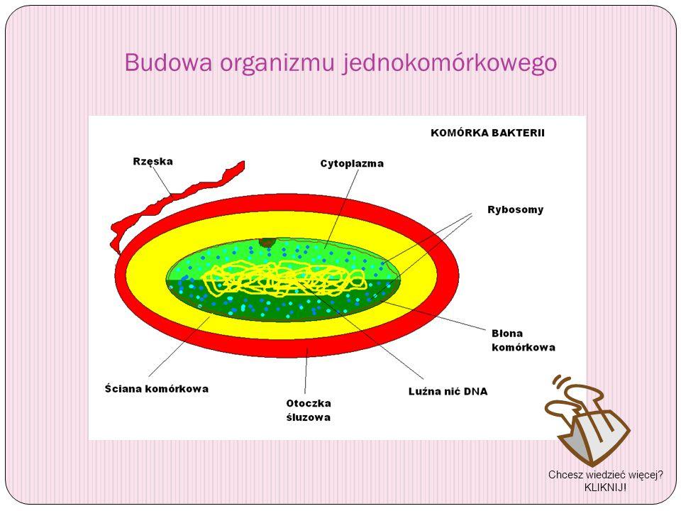 Budowa organizmu jednokomórkowego Chcesz wiedzieć więcej? KLIKNIJ!