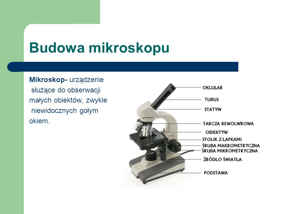 Budowa mikroskopu Mikroskop- urządzenie służące do obserwacji małych obiektów, zwykle niewidocznych gołym okiem.