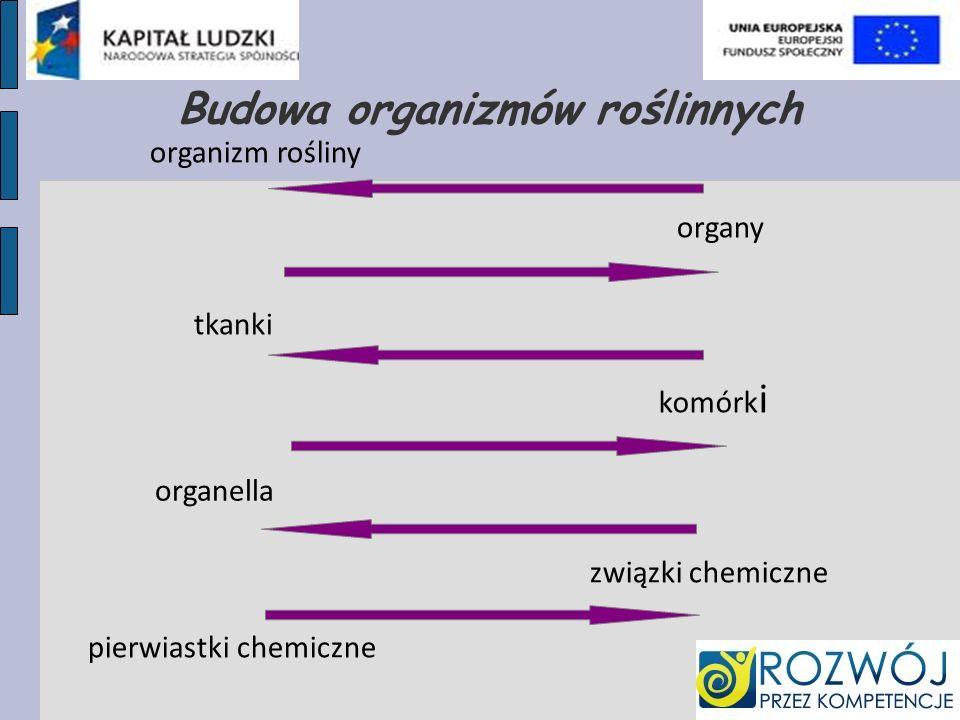 Budowa organizmów roślinnych organizm rośliny organy tkanki komórk i organella związki chemiczne pierwiastki chemiczne