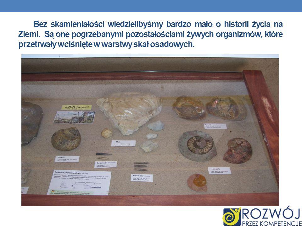 Bez skamieniałości wiedzielibyśmy bardzo mało o historii życia na Ziemi. Są one pogrzebanymi pozostałościami żywych organizmów, które przetrwały wciśn