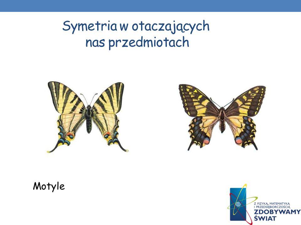 Symetria w otaczających nas przedmiotach Zwierzęta