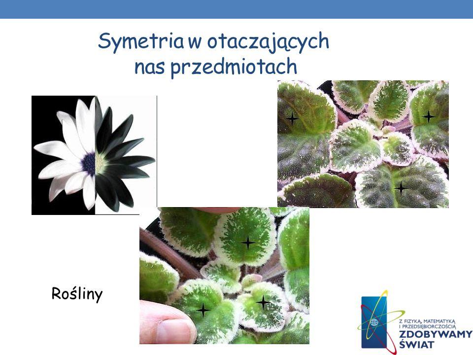 Symetria w otaczających nas przedmiotach Motyle