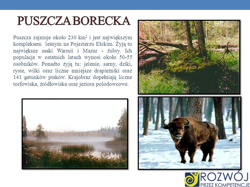 Puszcza zajmuje około 230 km 2 i jest największym kompleksem leśnym na Pojezierzu Ełckim. Żyją tu największe ssaki Warmii i Mazur - żubry. Ich populac