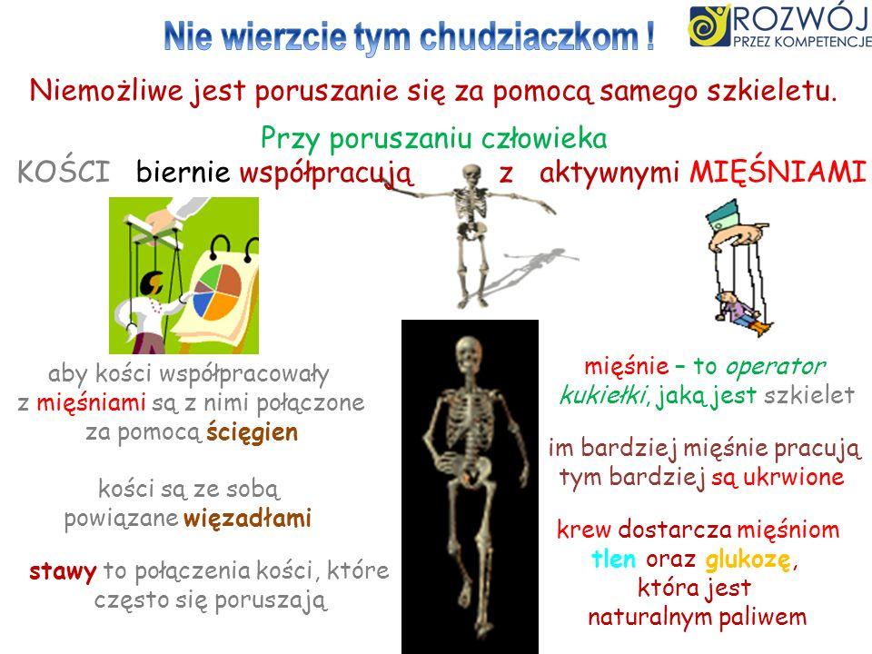 Niemożliwe jest poruszanie się za pomocą samego szkieletu. Przy poruszaniu człowieka KOŚCI biernie współpracują z aktywnymi MIĘŚNIAMI mięśnie – to ope