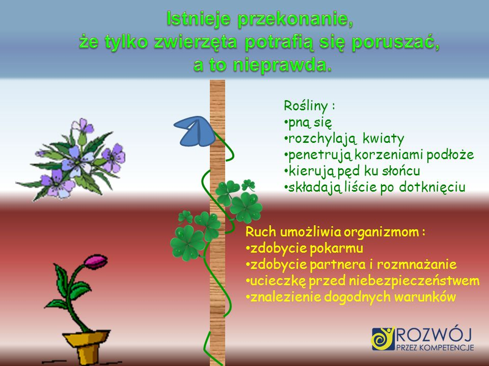 Rośliny : pną się rozchylają kwiaty penetrują korzeniami podłoże kierują pęd ku słońcu składają liście po dotknięciu Ruch umożliwia organizmom : zdoby
