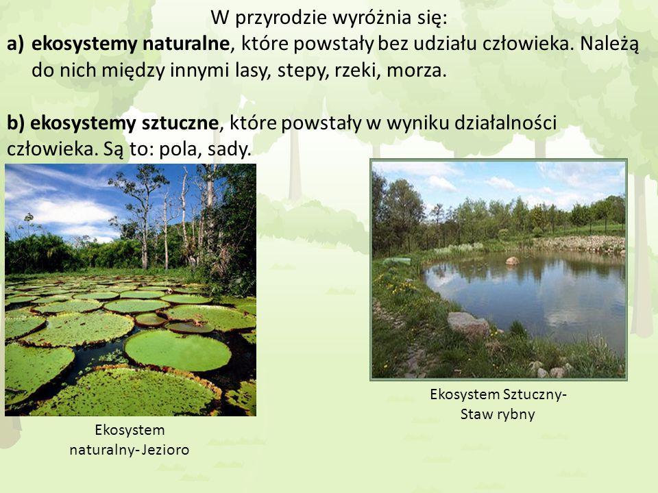 W przyrodzie wyróżnia się: a)ekosystemy naturalne, które powstały bez udziału człowieka. Należą do nich między innymi lasy, stepy, rzeki, morza. b) ek