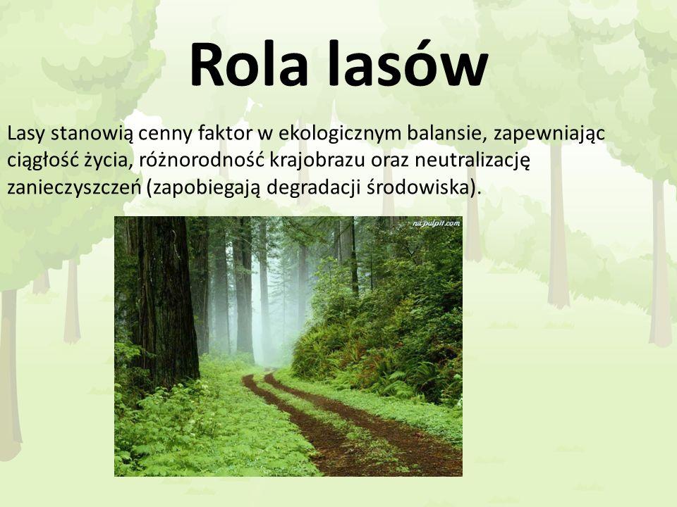 Rola lasów Lasy stanowią cenny faktor w ekologicznym balansie, zapewniając ciągłość życia, różnorodność krajobrazu oraz neutralizację zanieczyszczeń (