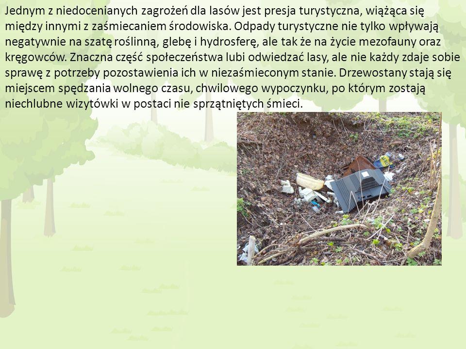 Jednym z niedocenianych zagrożeń dla lasów jest presja turystyczna, wiążąca się między innymi z zaśmiecaniem środowiska. Odpady turystyczne nie tylko