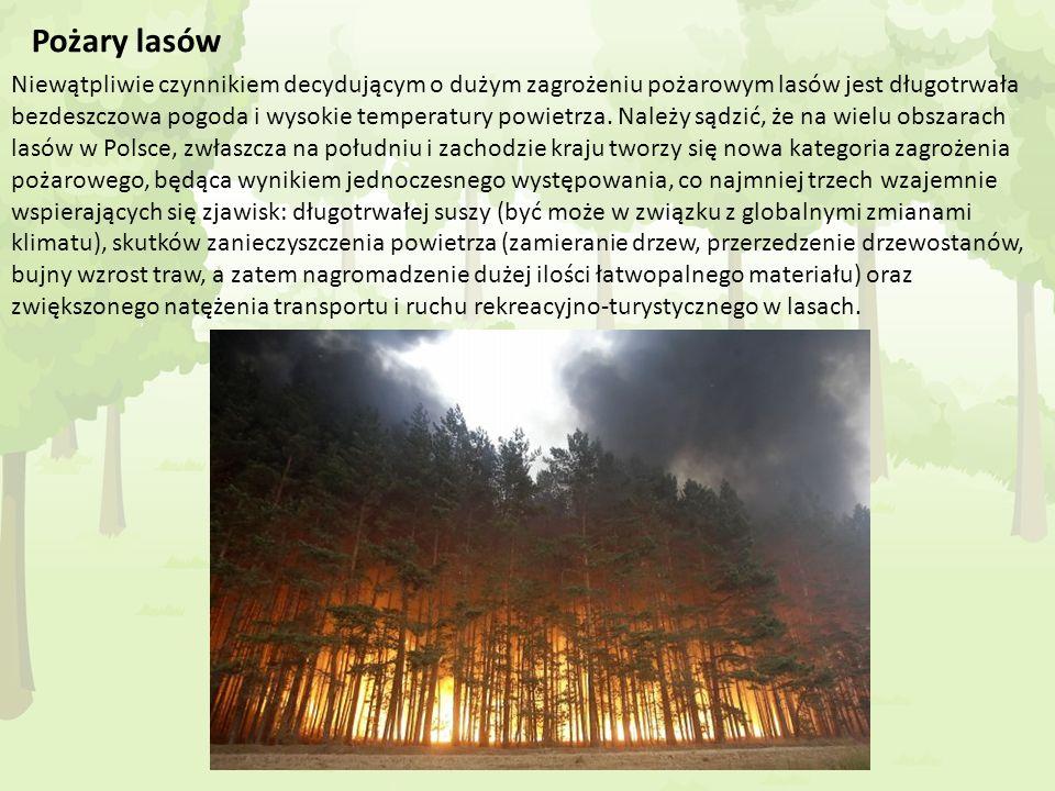 Pożary lasów Niewątpliwie czynnikiem decydującym o dużym zagrożeniu pożarowym lasów jest długotrwała bezdeszczowa pogoda i wysokie temperatury powietr