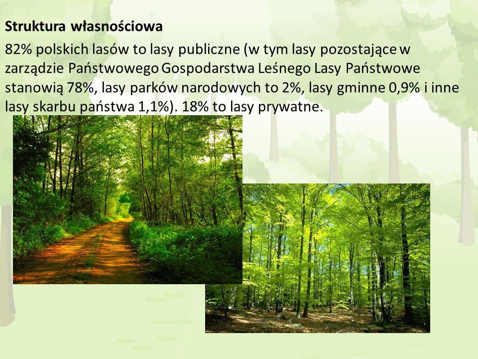 Struktura własnościowa 82% polskich lasów to lasy publiczne (w tym lasy pozostające w zarządzie Państwowego Gospodarstwa Leśnego Lasy Państwowe stanow