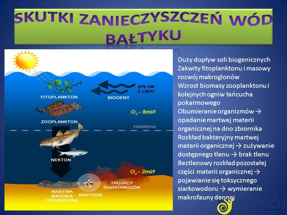 Duży dopływ soli biogenicznych Zakwity fitoplanktonu i masowy rozwój makroglonów Wzrost biomasy zooplanktonu i kolejnych ogniw łańcucha pokarmowego Ob