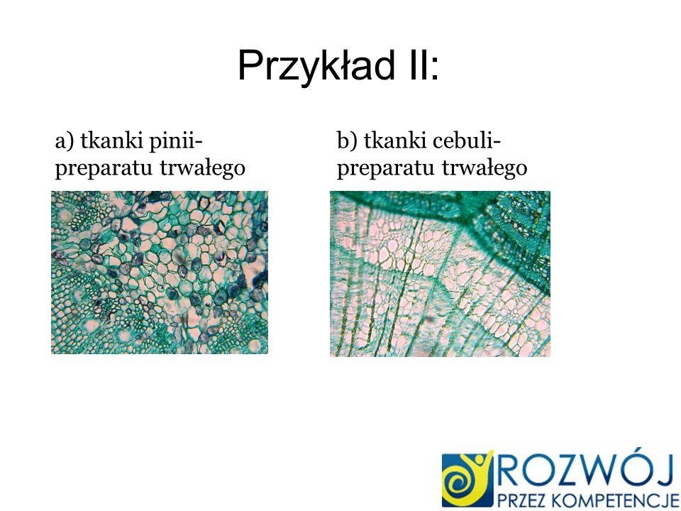 Przykład II: a) tkanki pinii- preparatu trwałego b) tkanki cebuli- preparatu trwałego