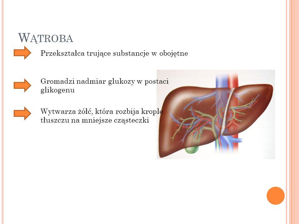 W ĄTROBA Przekształca trujące substancje w obojętne Gromadzi nadmiar glukozy w postaci glikogenu Wytwarza żółć, która rozbija krople tłuszczu na mniej