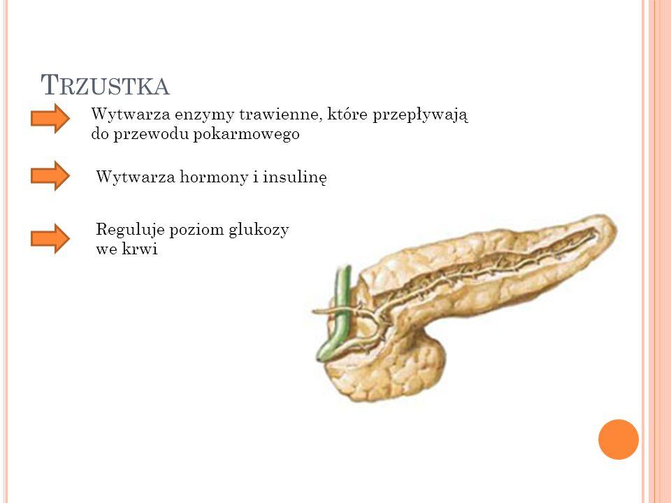 T RZUSTKA Wytwarza enzymy trawienne, które przepływają do przewodu pokarmowego Wytwarza hormony i insulinę Reguluje poziom glukozy we krwi