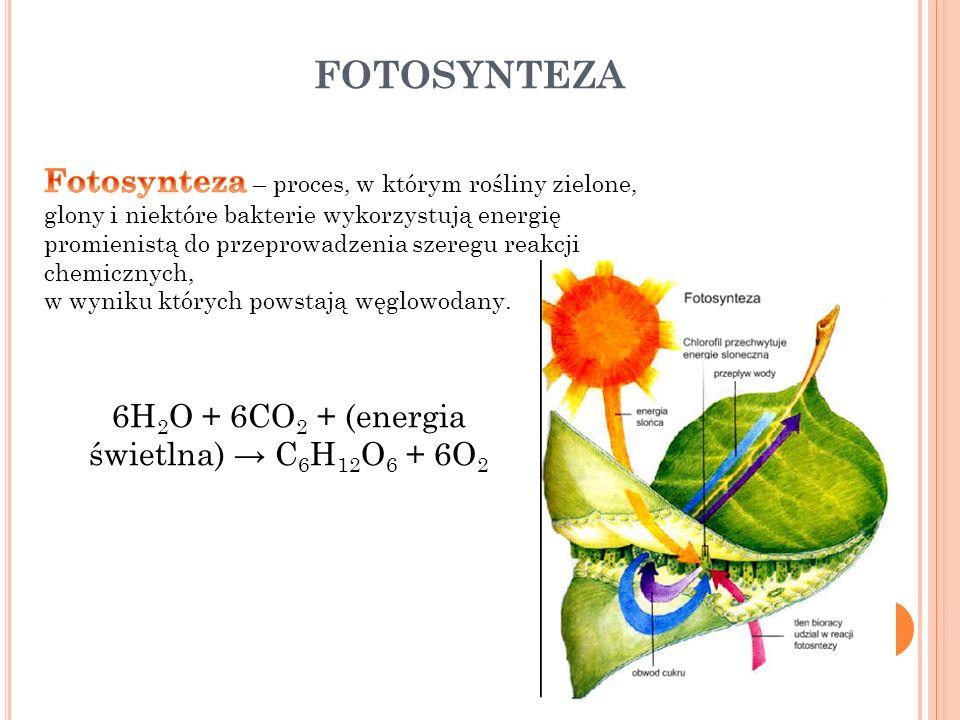 FOTOSYNTEZA 6H 2 O + 6CO 2 + (energia świetlna) C 6 H 12 O 6 + 6O 2