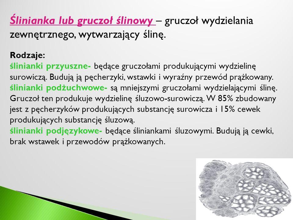 Ślinianka lub gruczoł ślinowy – gruczoł wydzielania zewnętrznego, wytwarzający ślinę. Rodzaje: ślinianki przyuszne- będące gruczołami produkującymi wy