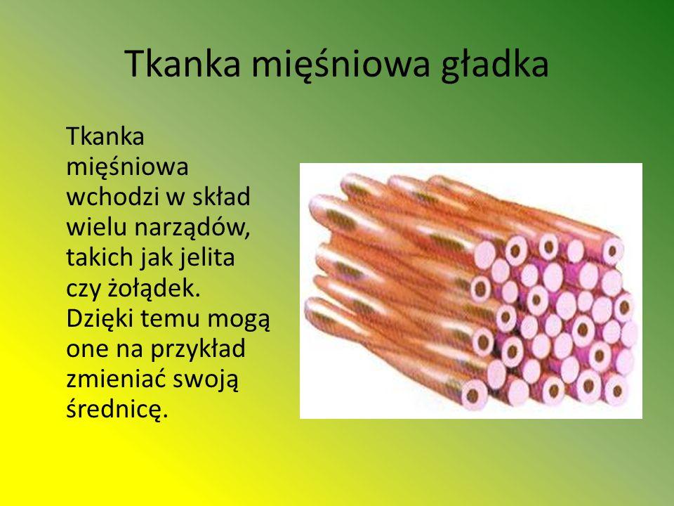 Tkanka mięśniowa gładka Tkanka mięśniowa wchodzi w skład wielu narządów, takich jak jelita czy żołądek.