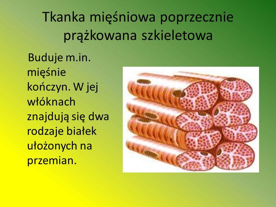 Tkanka mięśniowa poprzecznie prążkowana szkieletowa Buduje m.in.
