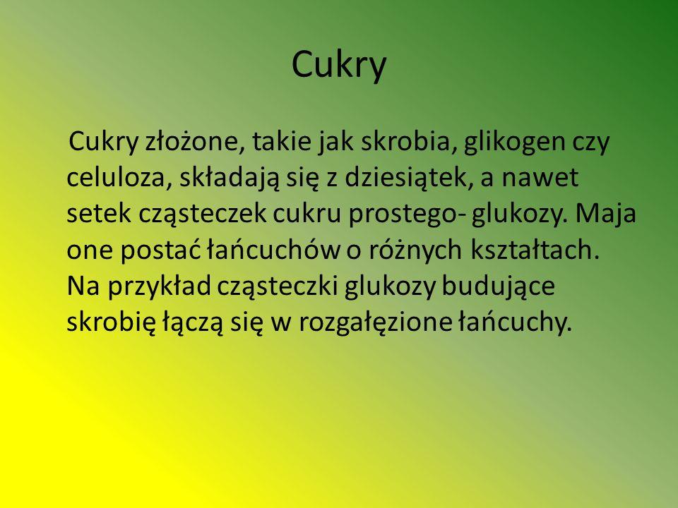 Cukry Cukry złożone, takie jak skrobia, glikogen czy celuloza, składają się z dziesiątek, a nawet setek cząsteczek cukru prostego- glukozy.