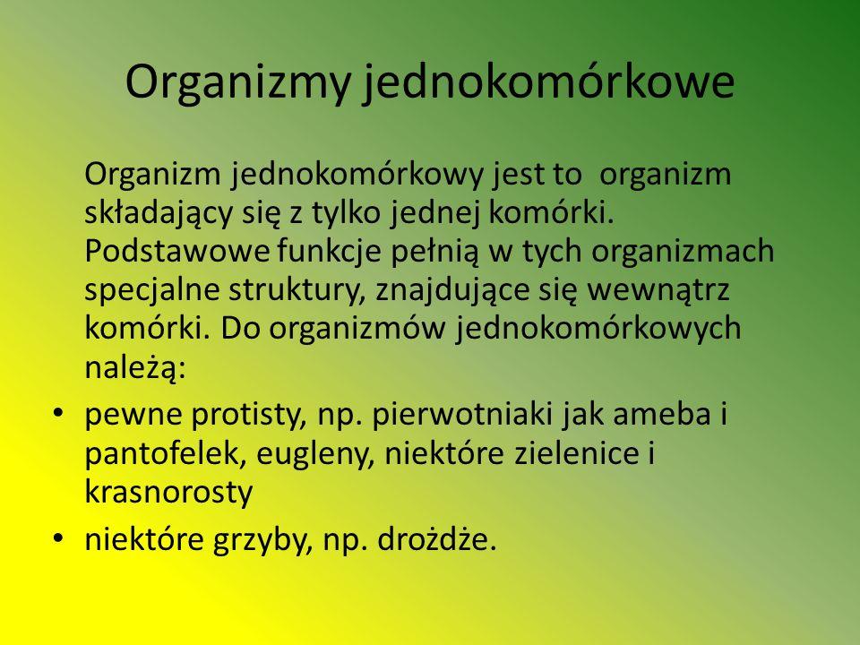 Organizmy jednokomórkowe Organizm jednokomórkowy jest to organizm składający się z tylko jednej komórki.