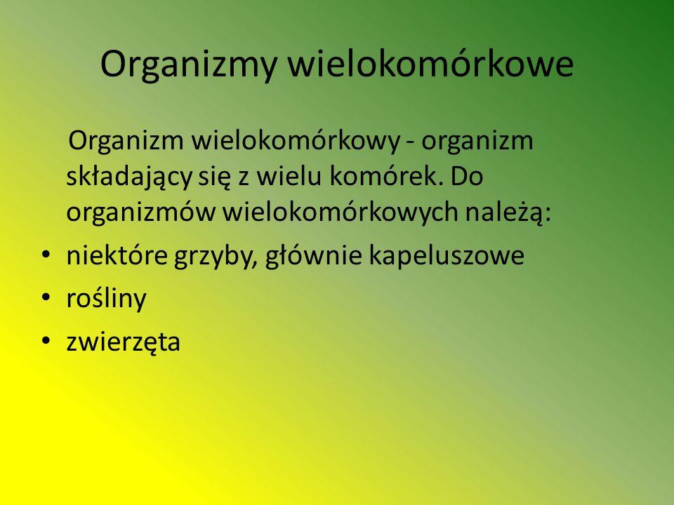 Organizmy wielokomórkowe Organizm wielokomórkowy - organizm składający się z wielu komórek.