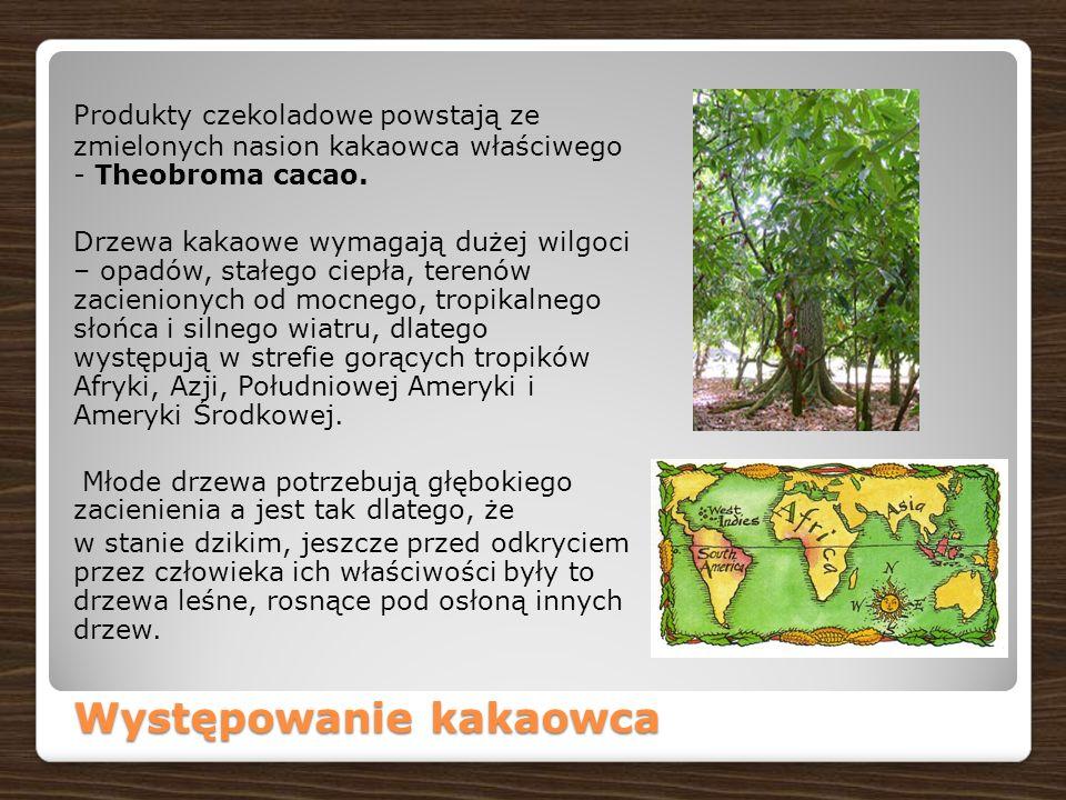 Produkty czekoladowe powstają ze zmielonych nasion kakaowca właściwego - Theobroma cacao.