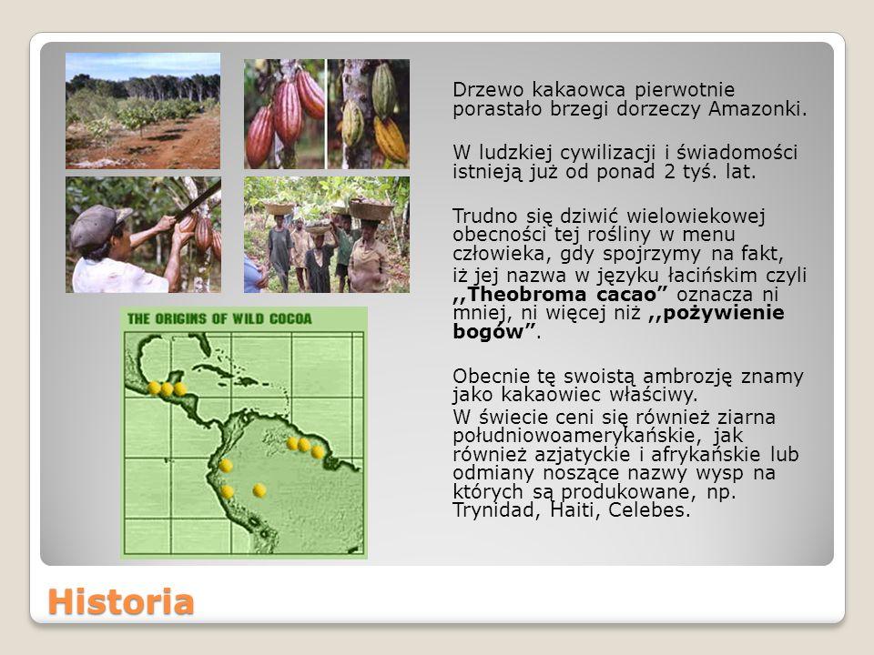 Historia Drzewo kakaowca pierwotnie porastało brzegi dorzeczy Amazonki.